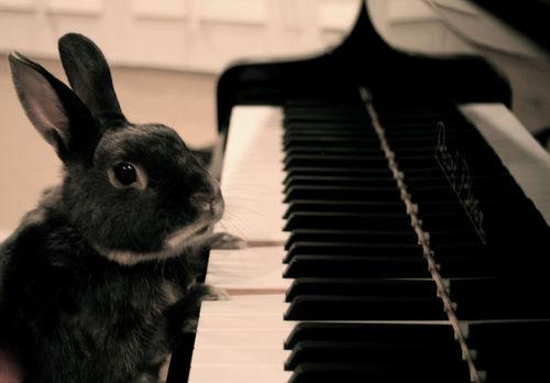 bunny on piano