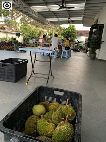 durian party-2