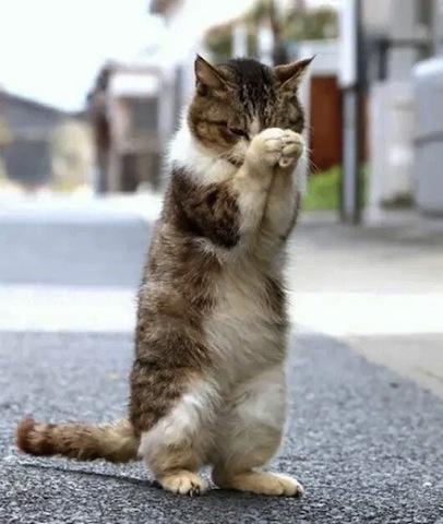 grateful cat