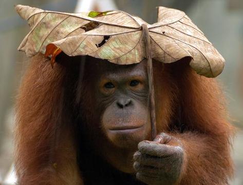 a makeshift umbrella