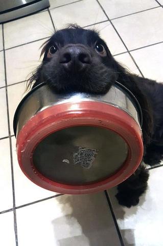cute dog demanding food