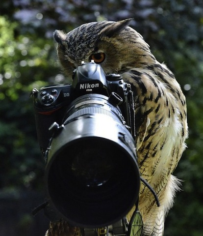 owl and camera.jpg