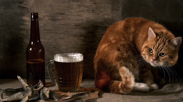 cute cat with beer