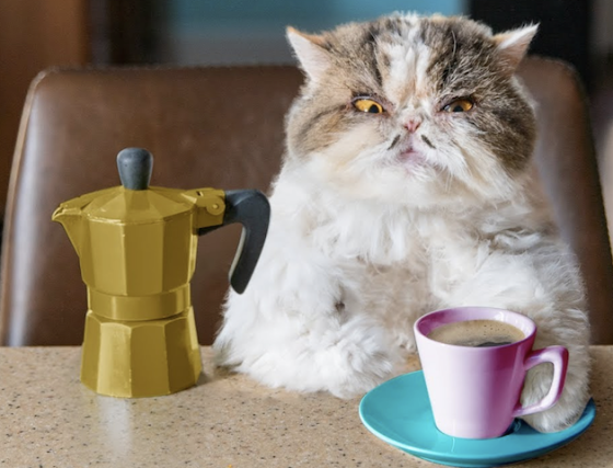 cute cat with coffee.png
