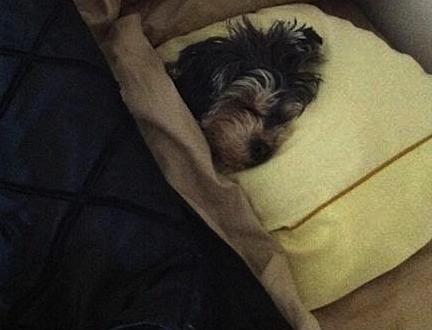 cute dog sleeping.png
