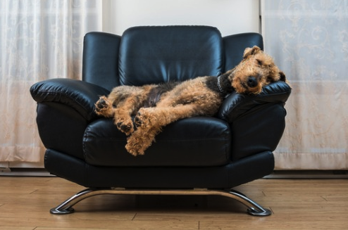 cute terrier relaxing.png