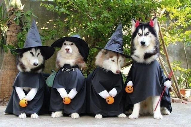 happy witches.jpg