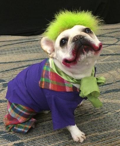 joker pug.png