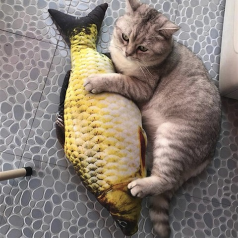 cat with toy fish