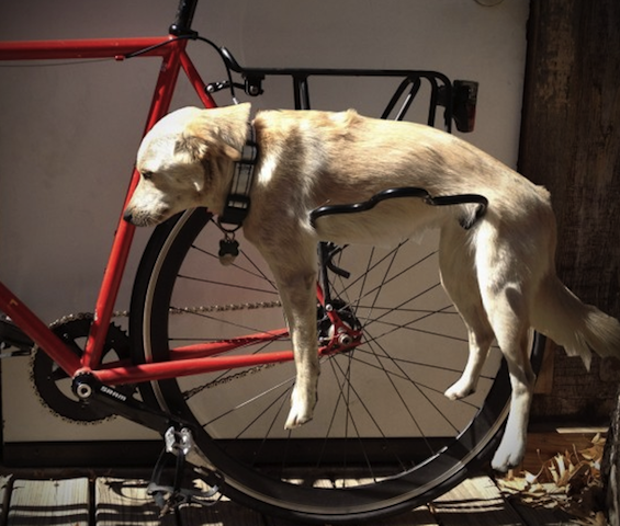 funny dog on bike.png