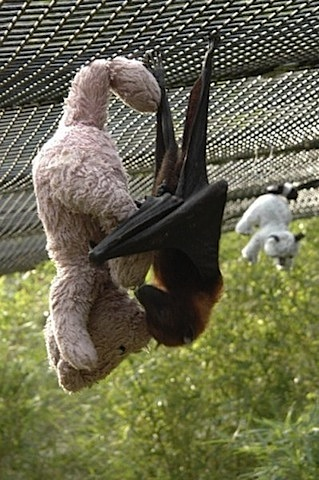 bat and teddy
