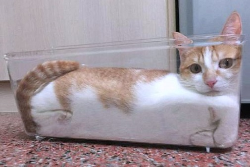 cat in glass container