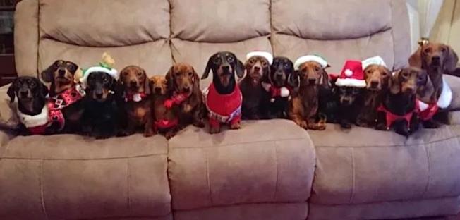 christmas sausages.png