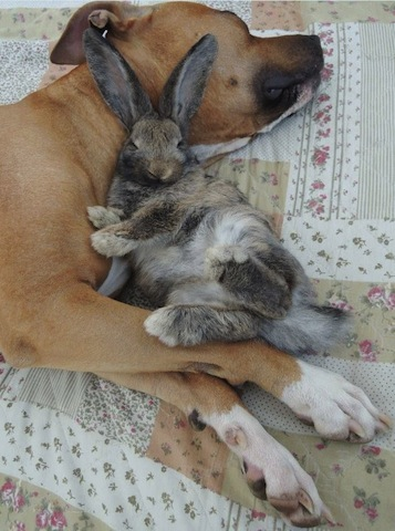 cute dog and bunny