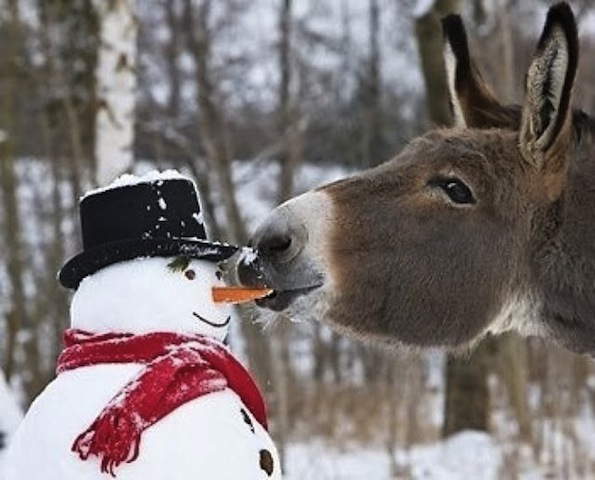 cute donkey with snowman