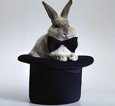 cute rabbit sittin on hat