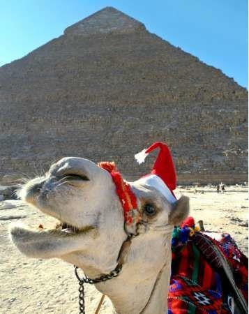 santa camel