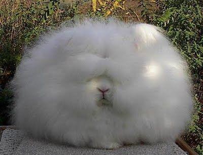 cloud or bunny