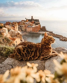 cute cat enjoying nature