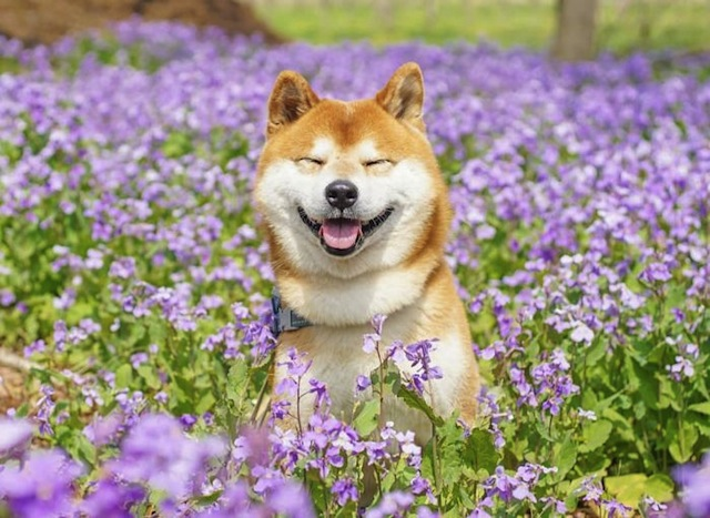 cute dog in field