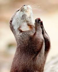 otterly pious