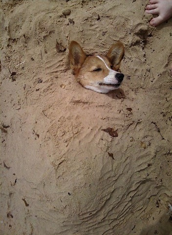 cute dog buried in sand