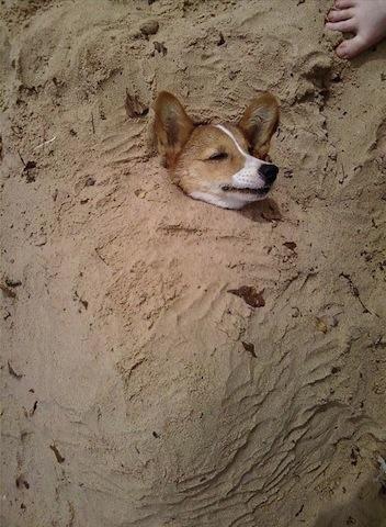cute dog buried in sand