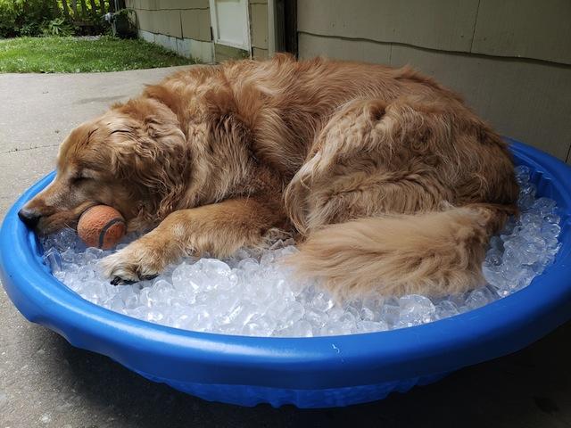 cute dog on ice