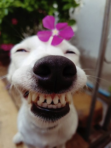 cute smiley dog