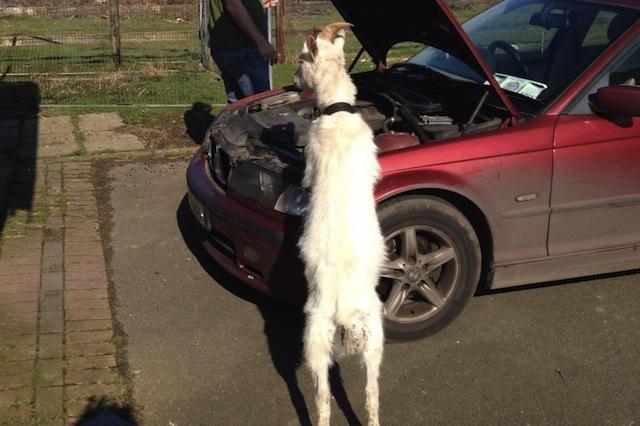 mechanic goat