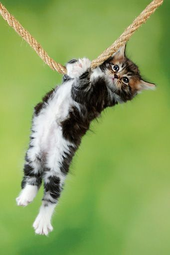 cat hanging on