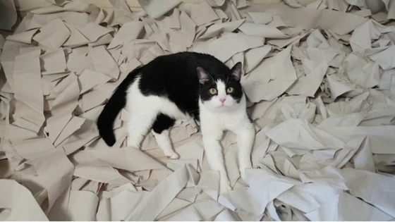 cat with toilet paper