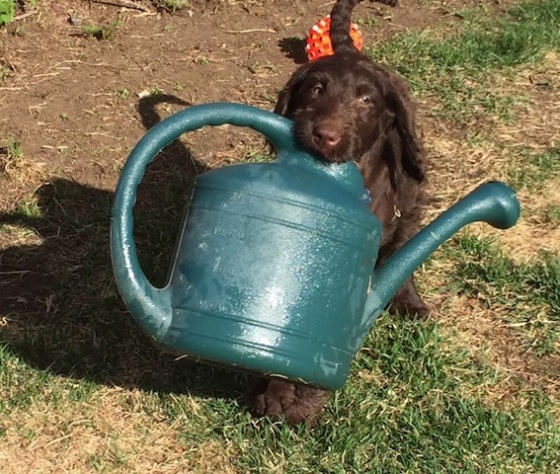 cute dog with watering can