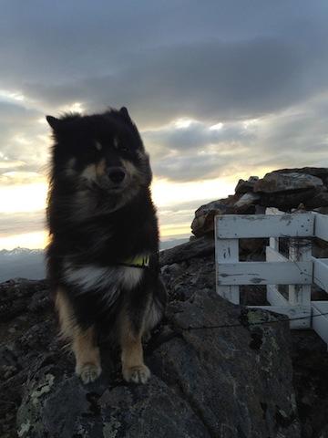 cute doggie on higher ground