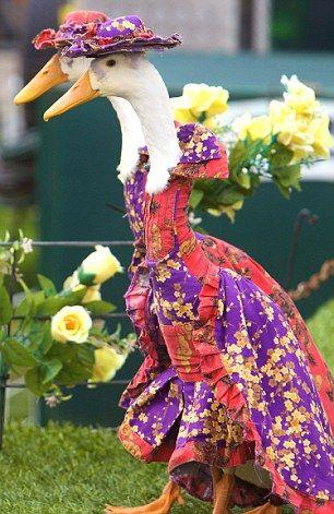 pretty geese