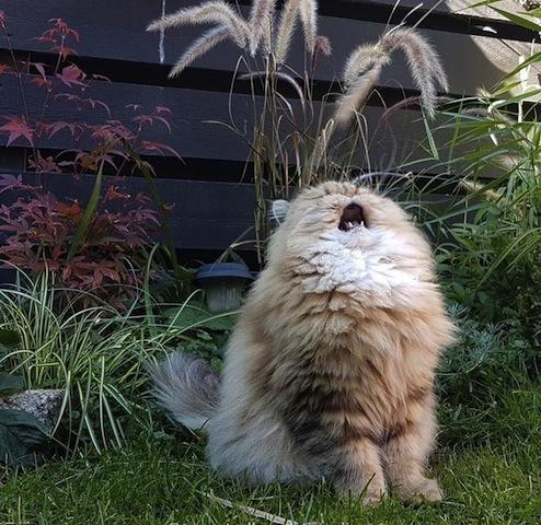 sneezing cat