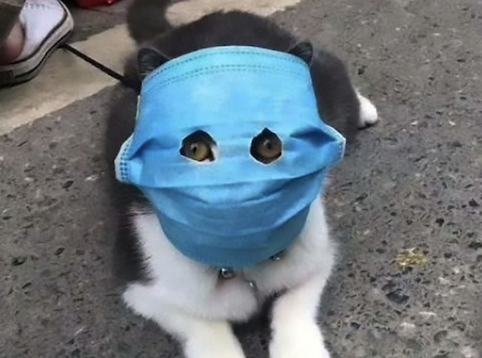 cat wearing mask
