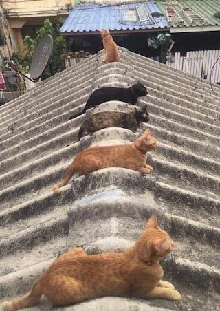 cats social distance