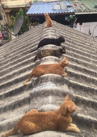 cats social distance