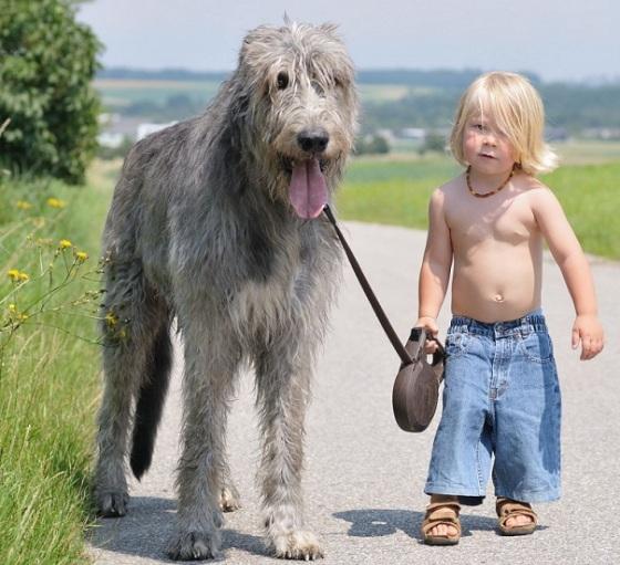 cute boy with big dog