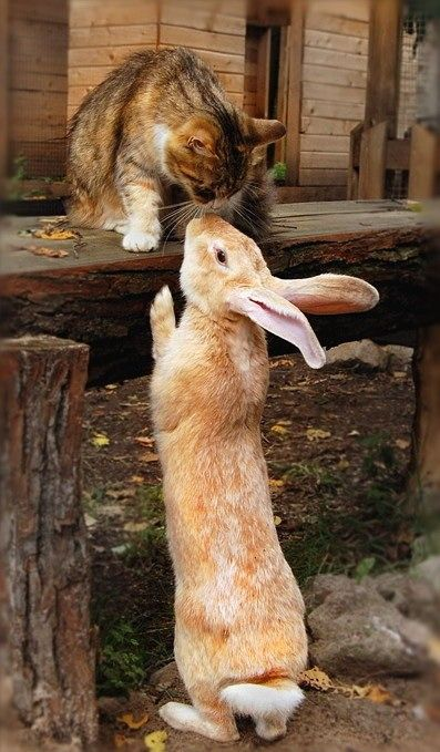 cute cat and bunny