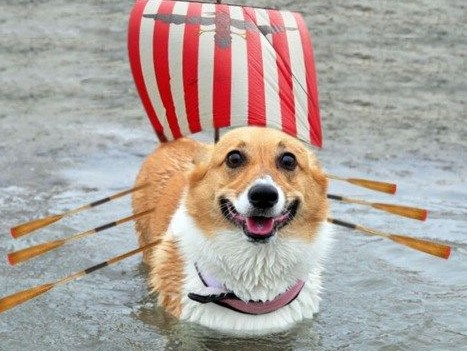 cute dog with ship costume