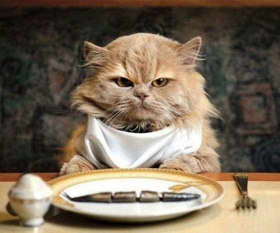 cat dine solo
