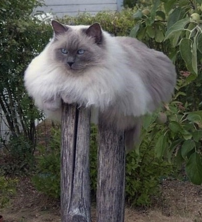 cat on poles