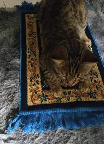cute cat on mat