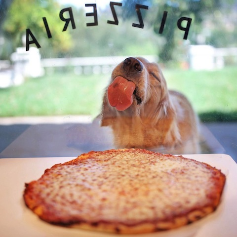 cute dog see food