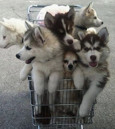 trolley of joy