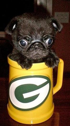 black pug in a mug