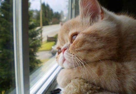 cat waiting