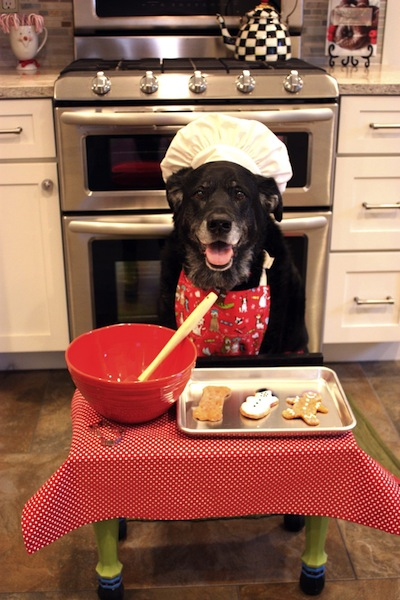 cute dog baking